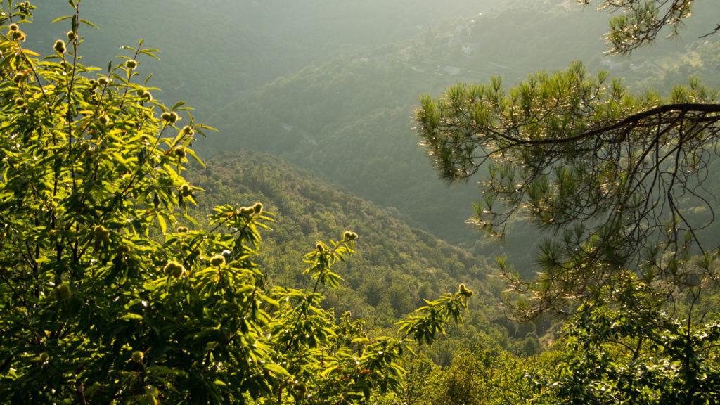 Le Parc National des Cévennes